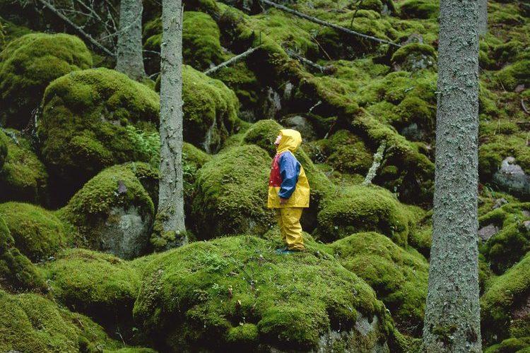 Liten flicka med regnkläder står på stenblock med mossa i barrskog Urskog, Norra Kvill, Småland  ©Håkan Sandbring / Sydpol.com / IBL bildbyrå